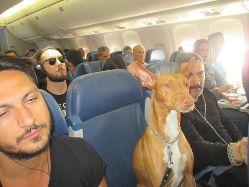 Yes, this dog was really on the plane!