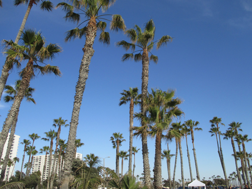 Arrived in LA. Yes, palm trees.